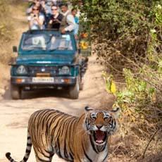 wildlifetourindia